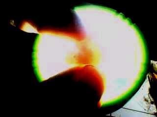 Telur Kenari yang berisi embrio   Image 4