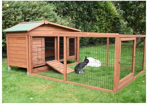 Kesehatan kelinci akan selalu tetap terjaga dengan memperhatikan kebersihan kandang dan lingkungan sekitar | gambar 5