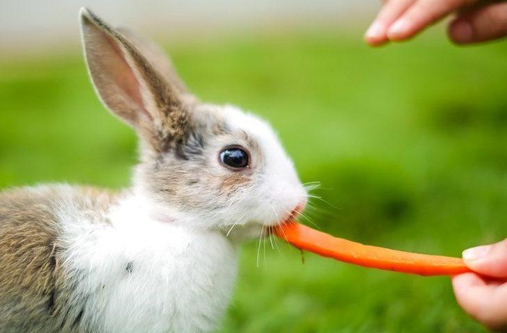 Kelinci memiliki sifat suka diperhatikan oleh pemiliknya | image 2