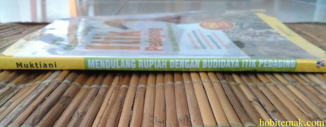 Mendulang Rupiah dengan Budidaya Itik Pedaging