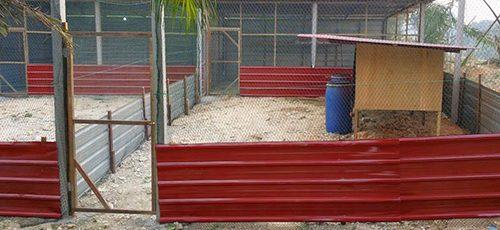Kandang Ternak Ayam Kampung Super Dengan Lantai Semen