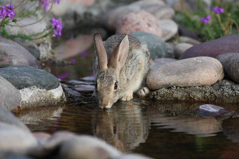 Kelinci adalah hewan yang lucu dan imut