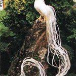 Ayam Onagadori