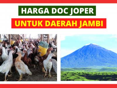 Joper Jambi HOBI TERNAK doc joer jambi word3