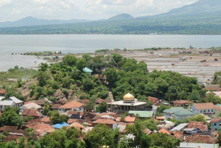 Harga Jual DOC atau Bibit Ayam Kampung Super (JOPER) untuk Daerah Bima Nusa Tenggara Barat