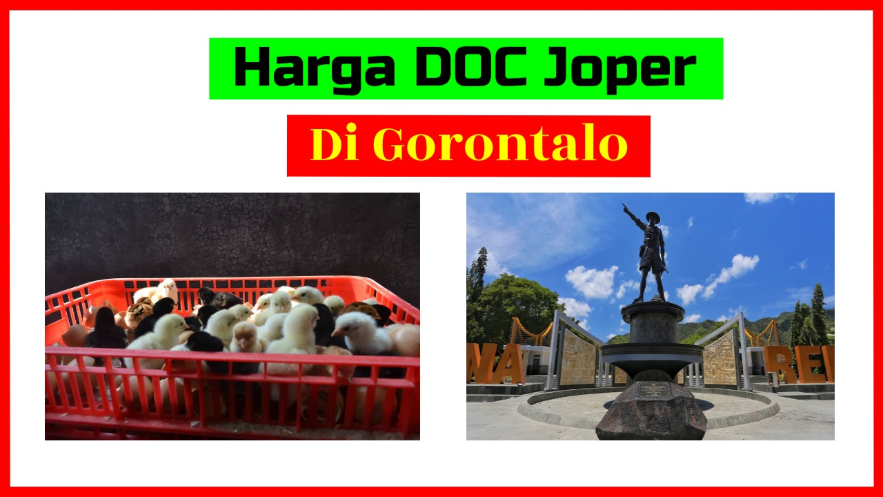 Harga DOC Joper Gorontalo HOBI TERNAK doc joper gorontalo word3