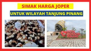 Joper Banda Tanjung Pinang HOBI TERNAK Bibit Ayam Kampung Super word3
