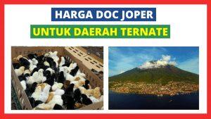 Joper Ternate 300x169 1 HOBI TERNAK Bibit Ayam Kampung Super word3