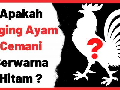Apakah benar daging ayam cemani berwarna hitam ? | Cover Cemani
