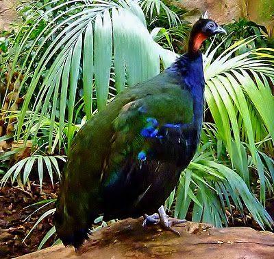 Download 400+ Foto Gambar Burung Merak Yang Indah Sekali  Paling Bagus
