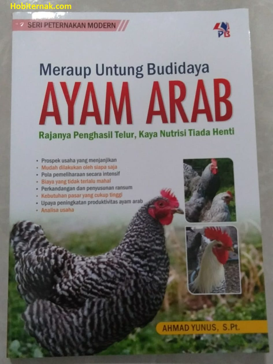Meraup Untung Budidaya Ayam ArabMeraup Untung Budidaya Ayam Arab