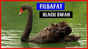 Angsa Hitam atau Black Swan HOBI TERNAK Filsafat Angsa Hitam word3