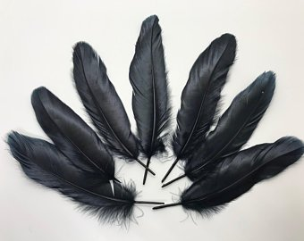 Cemani's feathers