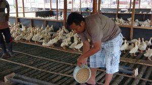 Iptu Iman Budiman sedang di area Kandang Bebek