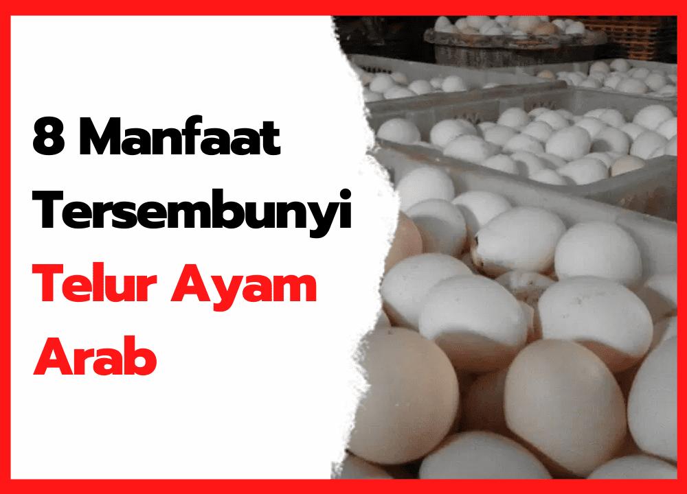 8 Manfaat Tersembunyi Telur Ayam Arab | thumbnail