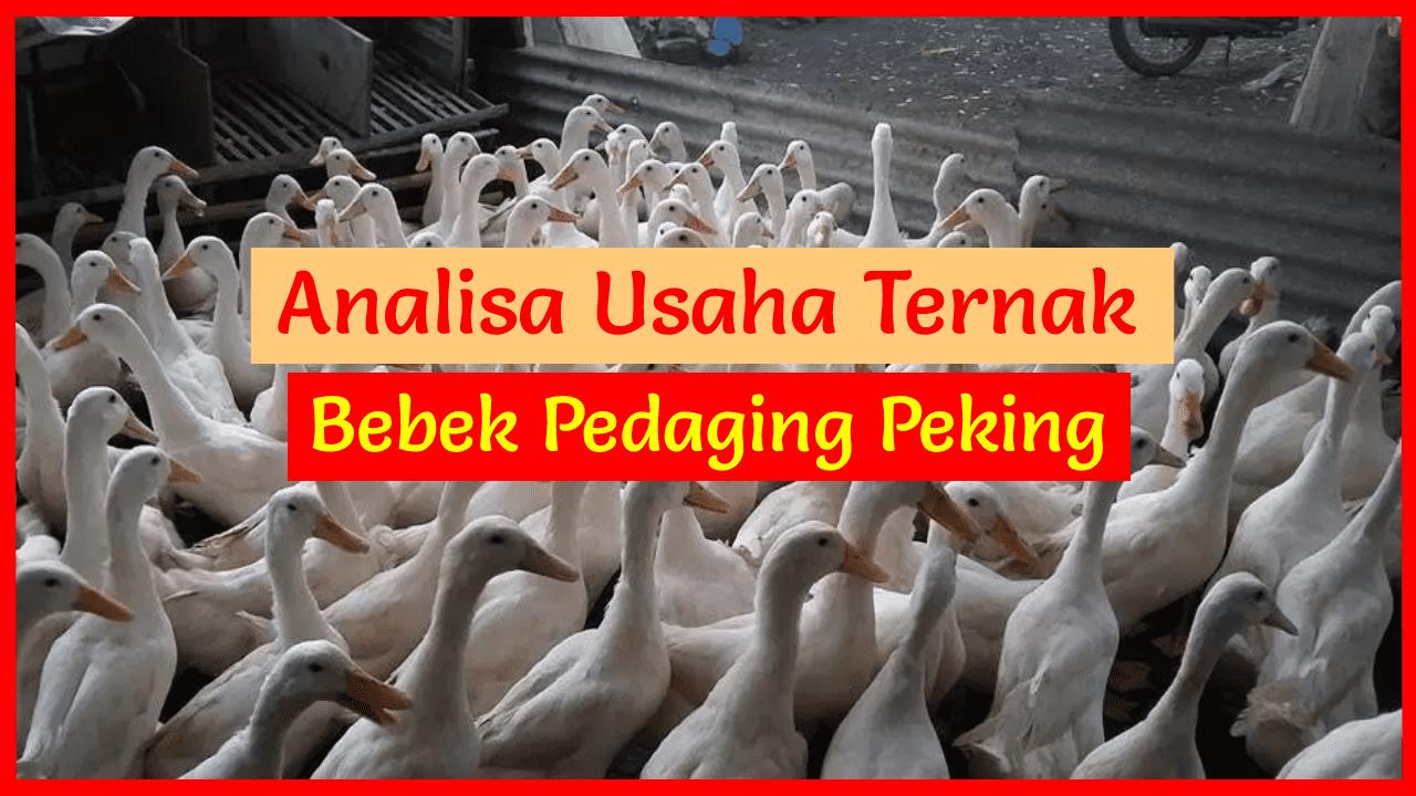 Alangkah lebih baik jika Anda mempelajari analisa bebek peking dan ilmu beternak dahulu sebelum memulai usaha ternak bebek pedaging peking.