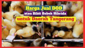 Harga Jual DOD atau Bibit Bebek Hibrida untuk Daerah Tangerang