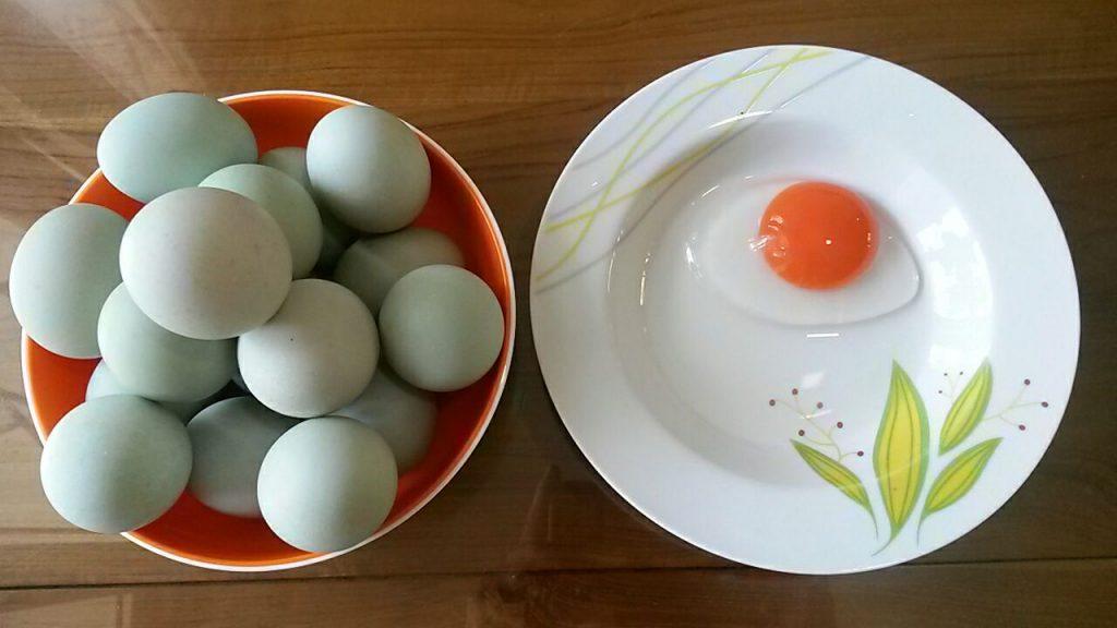 Telur bebek juga memiliki kandungan gizi yang bagus untuh tubuh manusia   Image 4