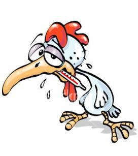 Ketika ayam dalam keadaan sakit segeralah pisahkan ayam dengan kelompk yang lain. Hal ini bertujuan agar penyakit ayam tersebut tidak menular ke ayam yang lainnya