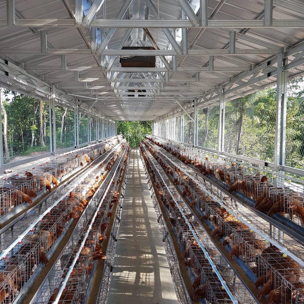 88 Foto Desain Kandang Untuk Ayam Petelur Terbaik