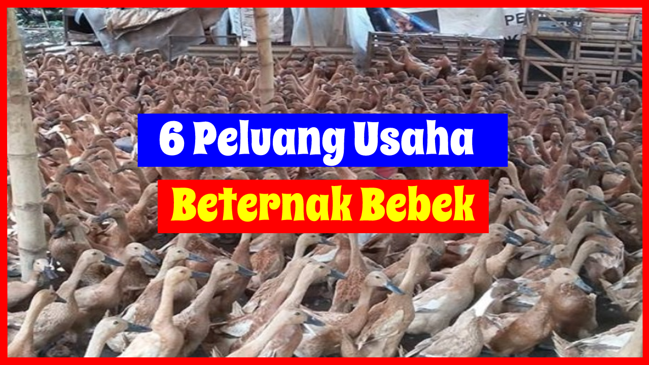 Peluang Usaha Ternak Bebek HOBI TERNAK Peluang word3