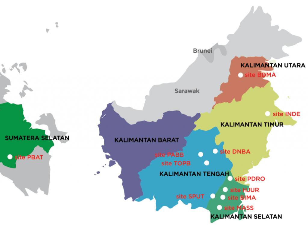 Daftar Harga DOC Ayam Arab untuk Pulau Kalimantan