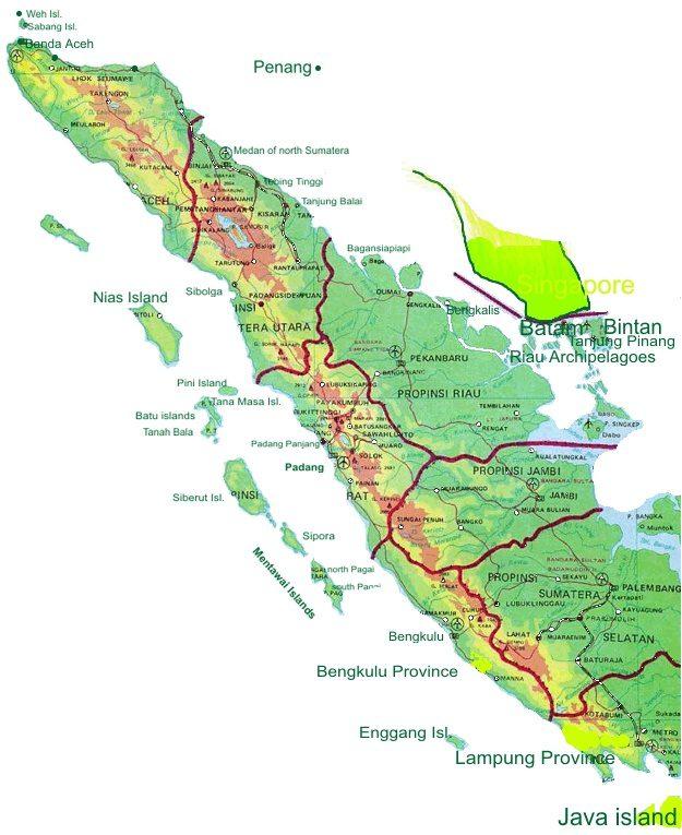 Daftar Harga DOC Ayam Petelur di wilayah Sumatera | image 5