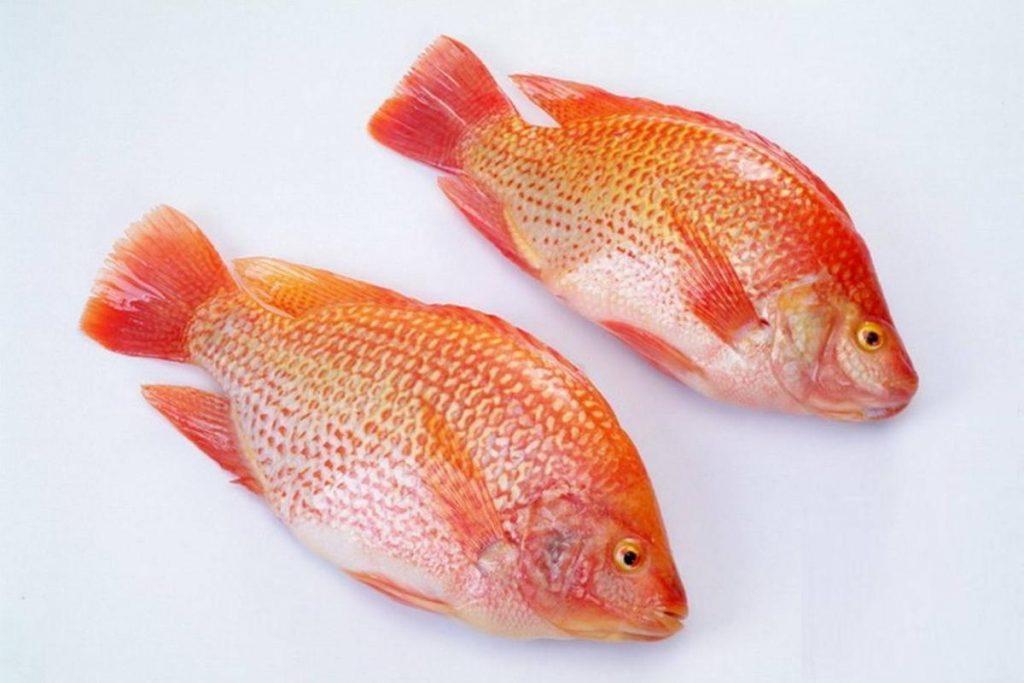 Ikan Nila HOBI TERNAK Manfaat Ikan Lele dan Berbagai Jenis Ikan Lainnya word2