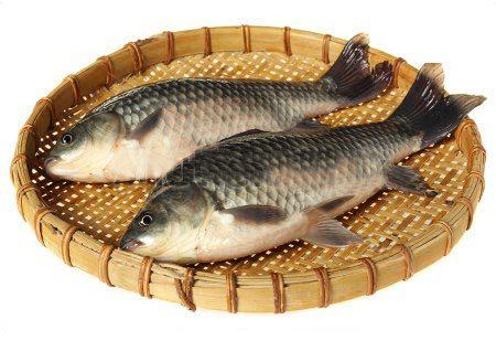 Khasiat Ikan Mas HOBI TERNAK Manfaat Ikan Lele dan Berbagai Jenis Ikan Lainnya word2