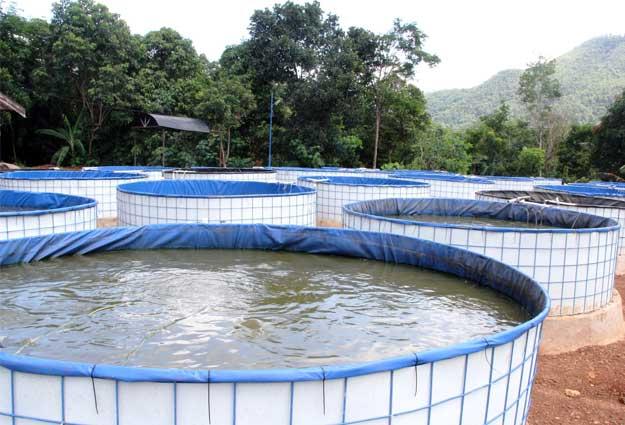 Budidaya Ikan Lele di Kolam Bioflok