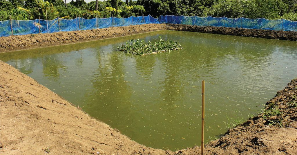 Kualitas Air Kolam Tanah