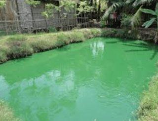 Warna air kolam yang baik