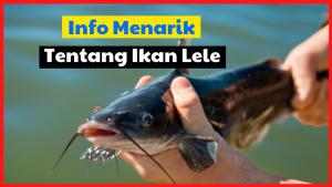 Info Menarik Tentang Ikan Lele