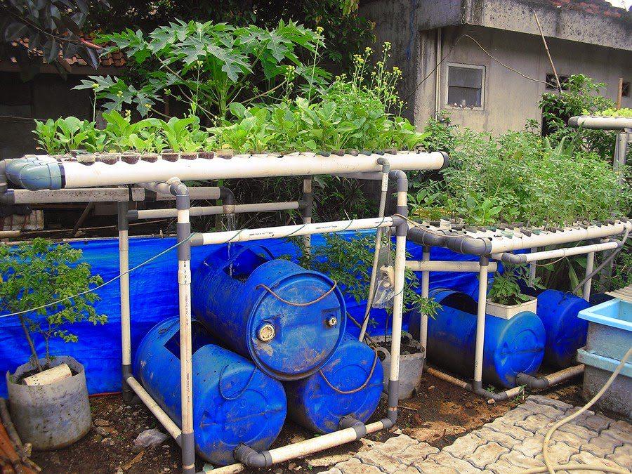 ternak lele dalam drum plastik bisa diaplikasikan di lahan sempit