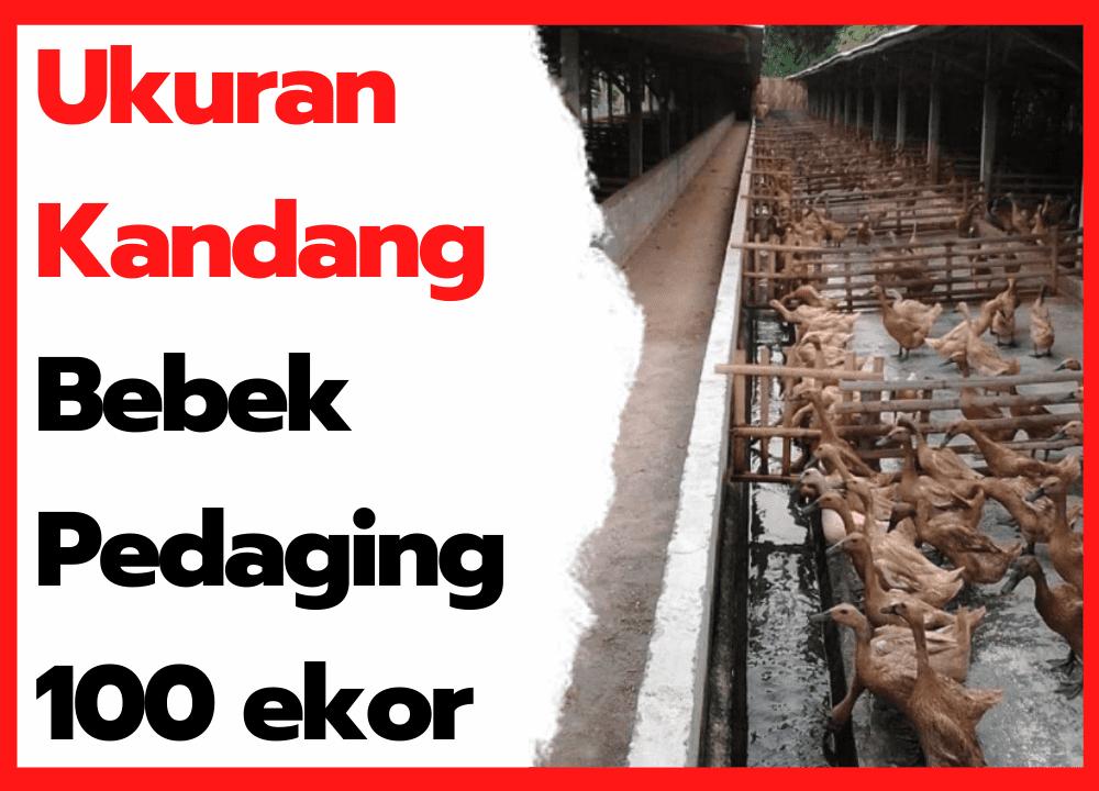 Ukuran Kandang Bebek Pedaging 100 ekor  | cover