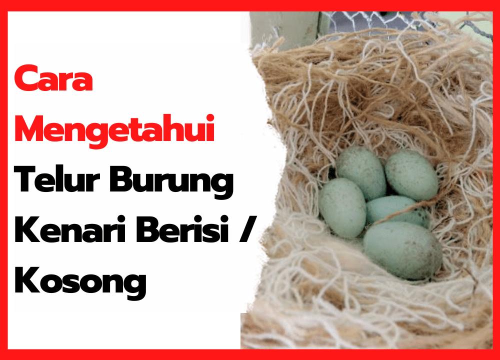 Cara Mengetahui Telur Burung Kenari Berisi atau Kosong   thumbnail