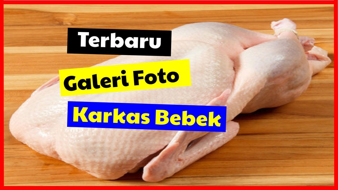 cropped Galeri foto karkas bebek HOBI TERNAK Karkas Bebek word1