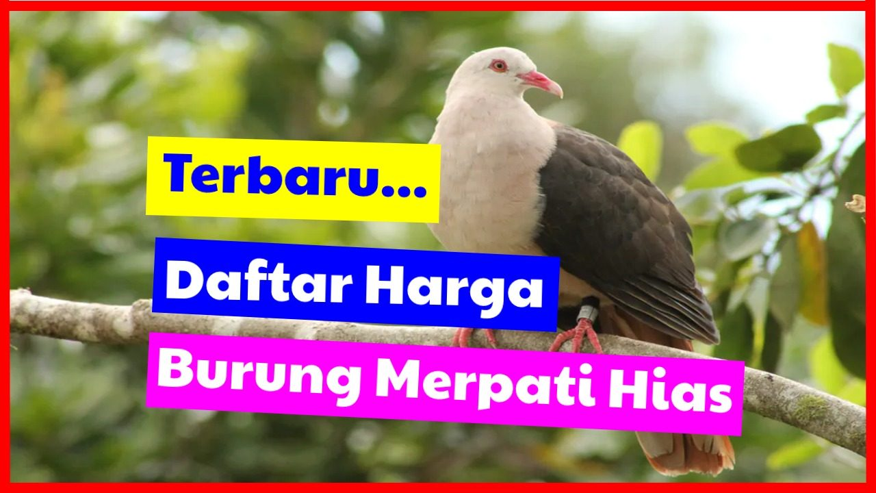 cropped Daftar harga burung merpati hias HOBI TERNAK harga merpati hias word3
