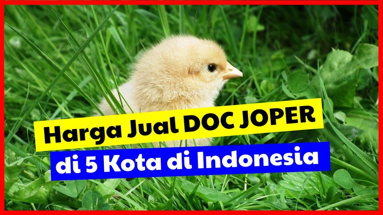 cropped Harga Jual DOC JOPER di 5 kota di Indonesia HOBI TERNAK jual doc joper word2