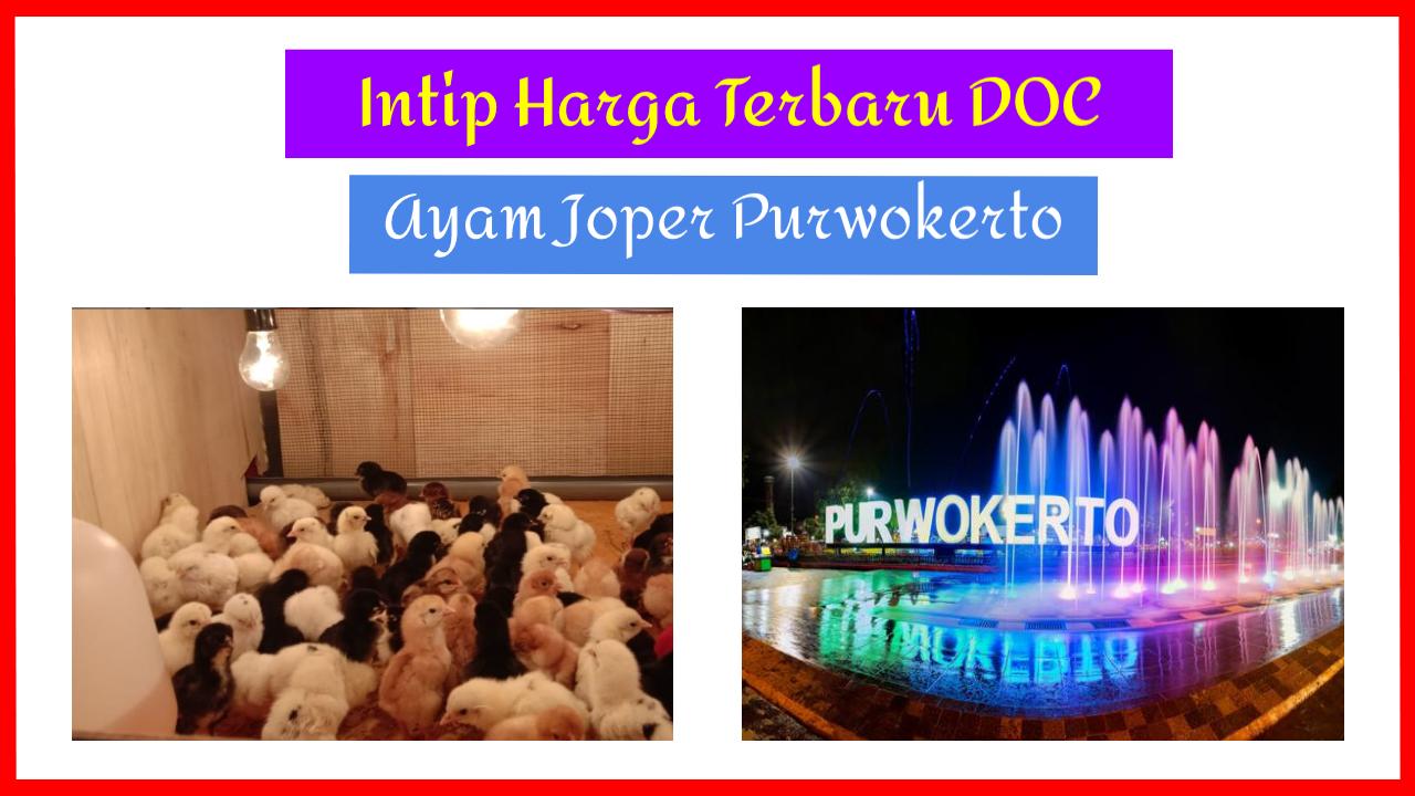 Intip harga terbaru doc joper purwokerto