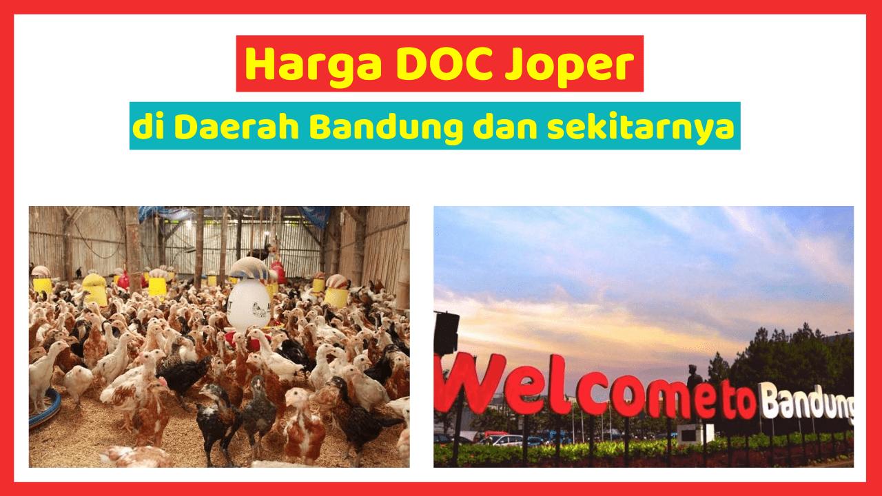 Harga DOC Atau Bibit Ayam Kampung Super (Joper) untuk Daerah Bandung