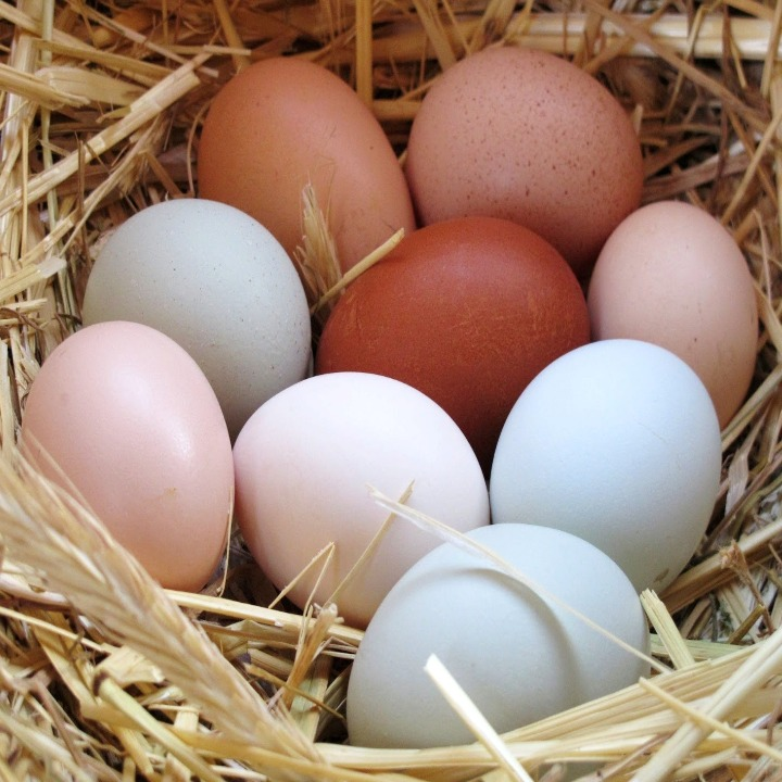 Telur Ayam Hias