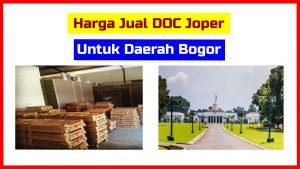 harga doc joper bogor HOBI TERNAK Ayam Kampung word1