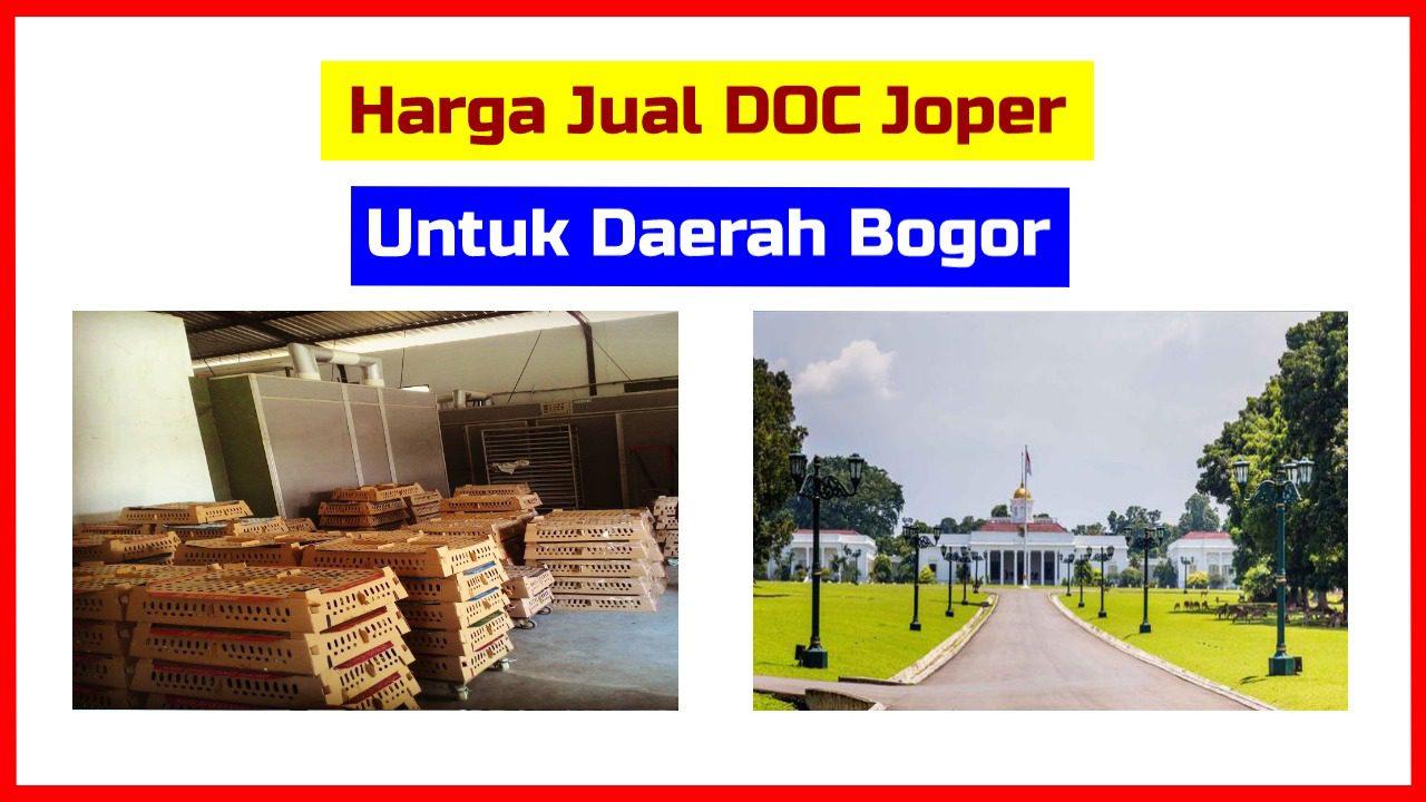 harga doc joper bogor HOBI TERNAK Ayam Kampung word3