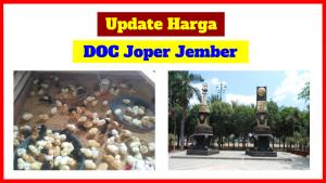 harga doc joper di wilayah jember