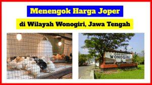 harga doc joper wonogiri 300x169 1 HOBI TERNAK doc ayam joper wonogiri word2