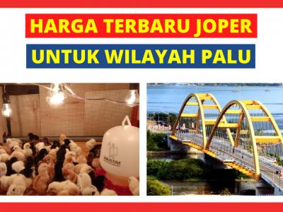 Harga DOC Ayam Kampung Super (JOPER) untuk Daerah Palu Sulawesi Tengah