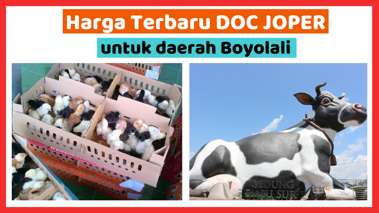 Kandang Ternak JOPER 5 1 HOBI TERNAK doc joper boyolali word3