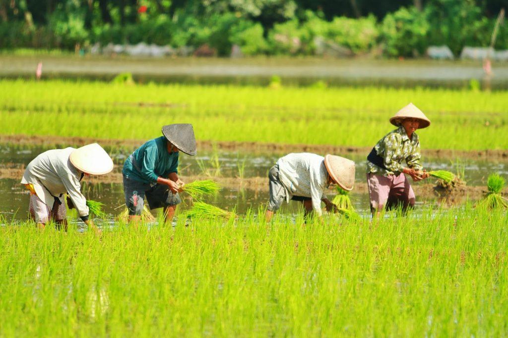Perekonomian masyarakat di Jawa Tengah kebanyakan berprofesi sebagai petani