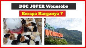 harga doc joper wonosobo